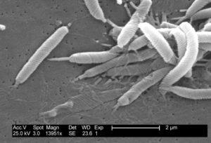 Bakterien im Darm