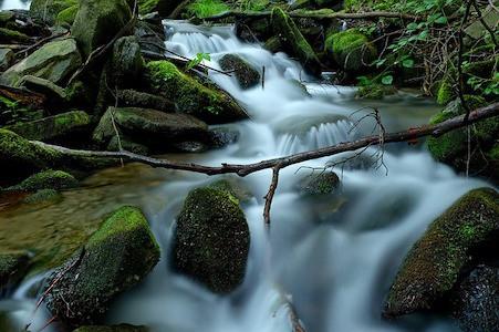 Rock Water - Felsenwasser - Bachblüten aus der PRAXIS für Gesundheit und Lebensfreude